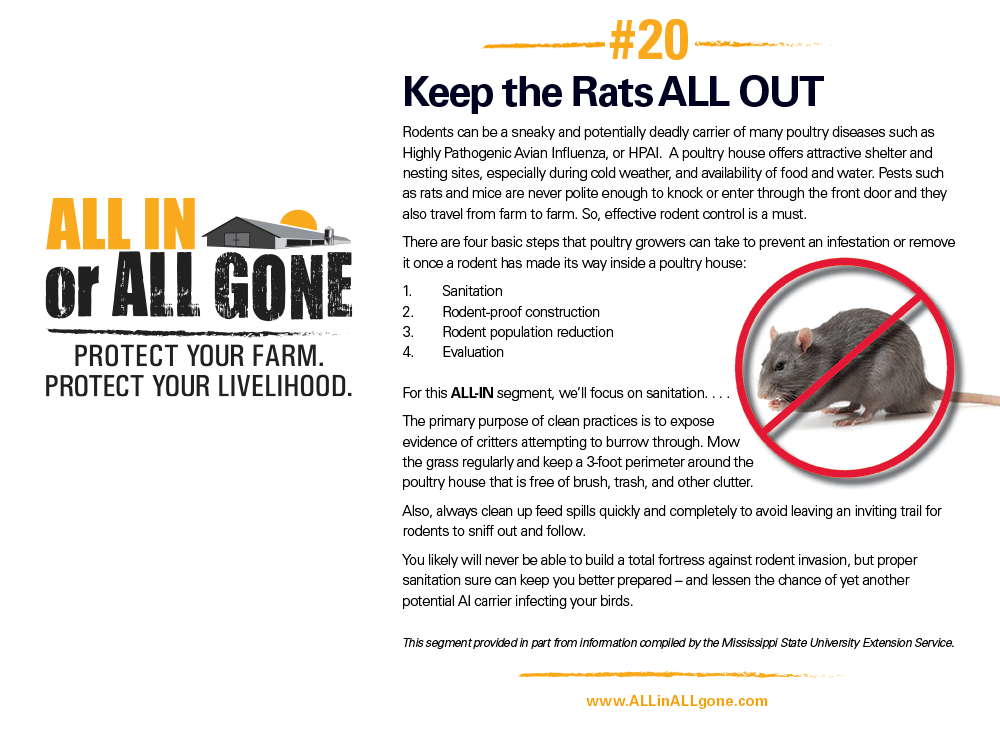 Keep the Rats ALL OUT